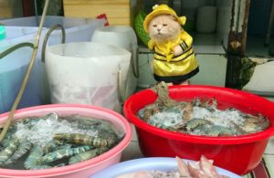 cho-vietnam-fisher-cat2