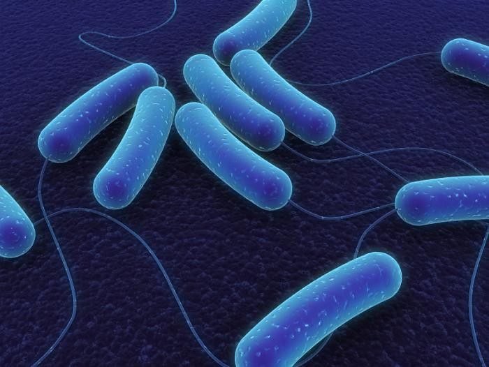 gut-microbiome