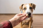 hand-offers-treat-staffordshire-terrier-dog.jpg
