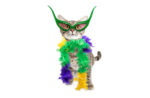 mardi-gras-party-cat