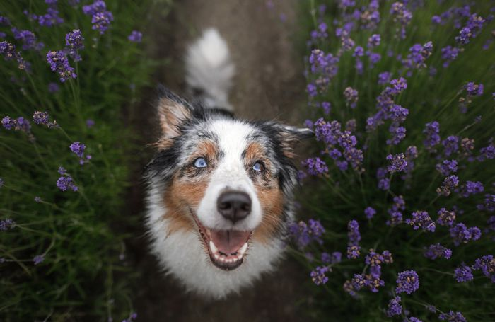 4 types of pet food ingredients for senior dogs