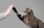 cat-giving-you-the-paw