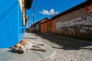 Mexican-street-dog