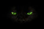 black-cat-green-eyes.jpg
