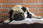 dog-with-book
