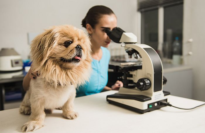 Dog microscope doctor laboratory veterinarian
