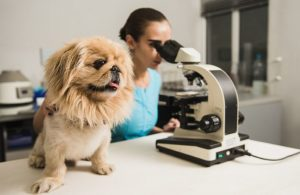 dog-microscope-doctor-laboratory-veterinarian.jpg
