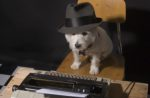 dog-typewriter-hat-reporter-journalist-detective.jpg