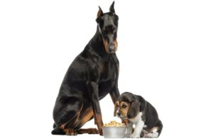 DCM-grain-free-pet-food-2020