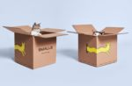 cats-in-smalls-boxes