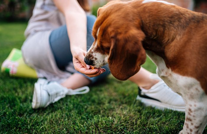 Dissecting DCM: When dogs' diets are incomplete, imbalanced