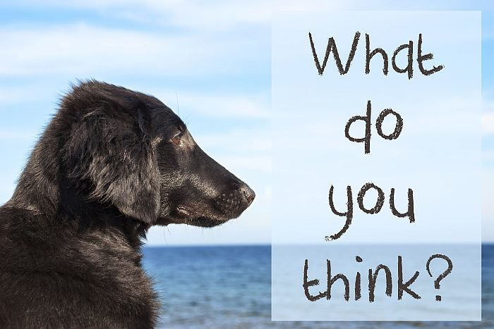 dog-question-confidence-index.jpg
