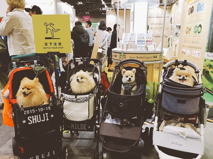 japan-small-dogs