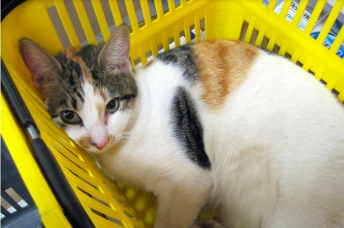 cat-in-yellow-basket
