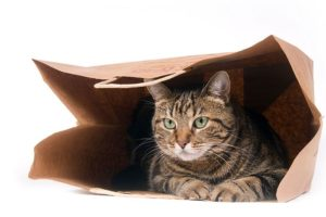 cat-in-paper-bag-grocery-FDM-mass-market.jpg