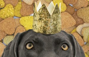 dog-treat-company-cover