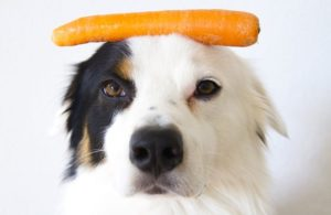 Dog-with-carrots
