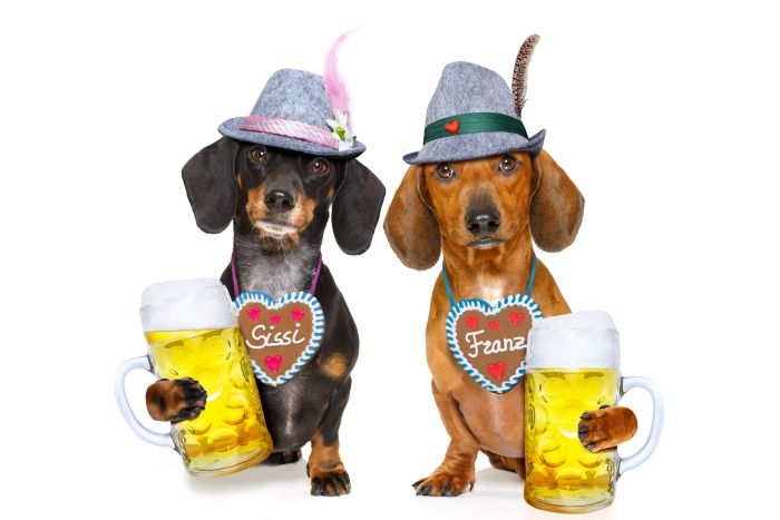 German bavarian beer dachshund dog octoberfest