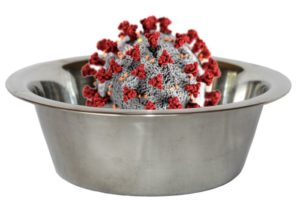 Pet food dish coronavirus.jpg