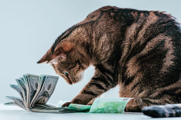Tabby cat money dollars business