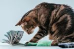 Tabby-cat-money-dollars-business.jpg