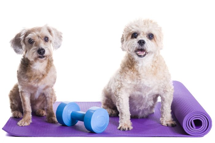 Dog fitness exercise yoga1
