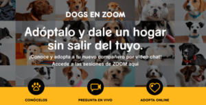 Dogs en Zoom Pedigree