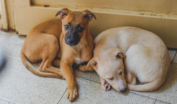 two puppies on a tile floor by a door