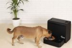 Kibus dehydrated dog food dispenser.jpg