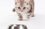cat-rushing-pet-bowl