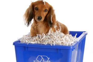 Dachshund recycle bin sustainability