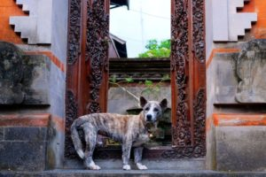 Indonesia dog guards temple.jpg