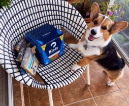 Bleiz-raw-dog-food-Corgi
