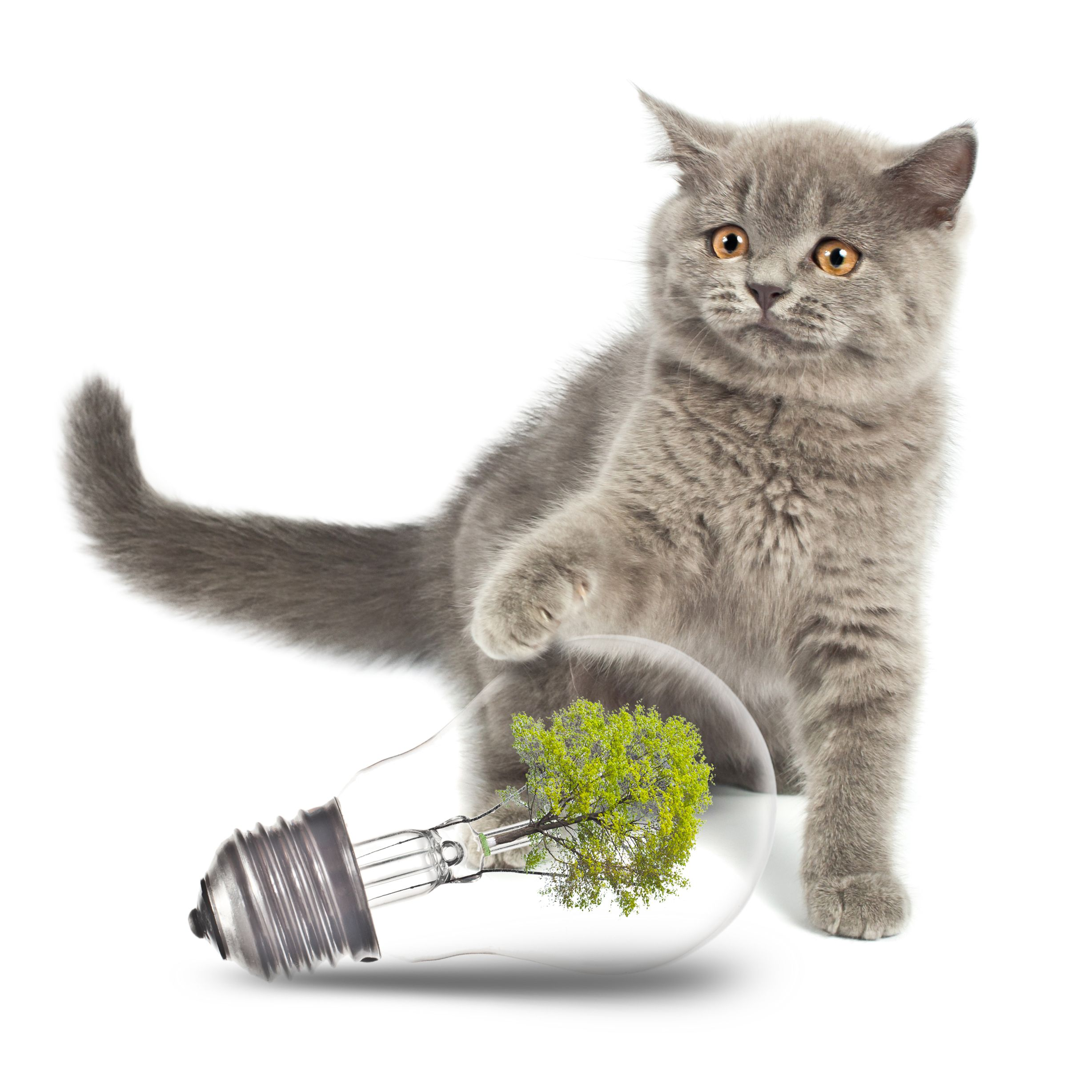 gray cat with lightbulb