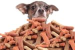pet-treats-from-human-trends