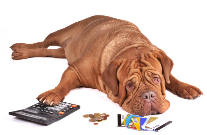Dog-calculator-coins-money-credit-cards-debt