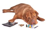 dog-calculator-coins-money-credit-cards-debt.jpg
