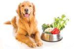 Nutrifusion pet food