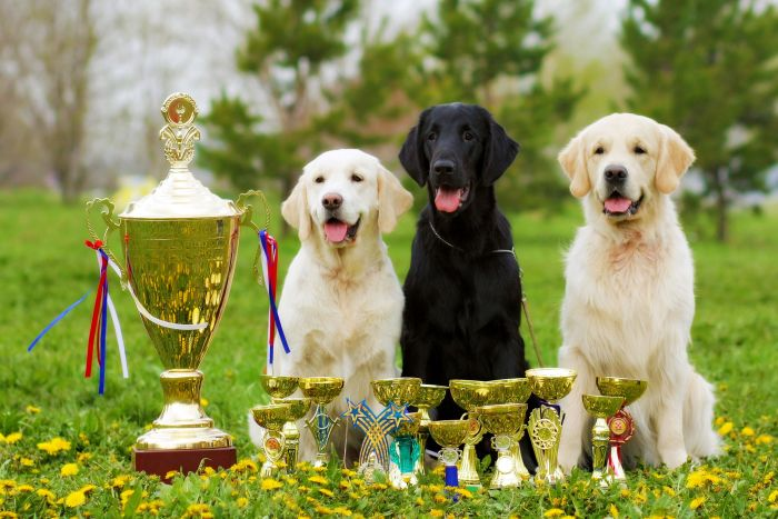 Transcontinental Packaging wins pet meals packaging awards
