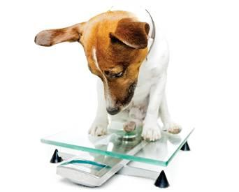 Dog-on-scale-1301PETnutrition
