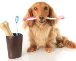 Dental-oral-pet-health-1305PETnutrition