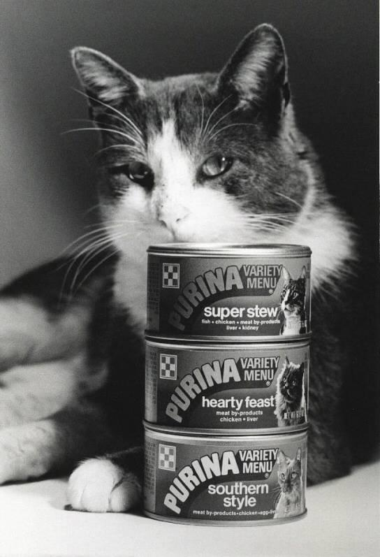 Cat sitting behind stack of vintage Purina cat food
