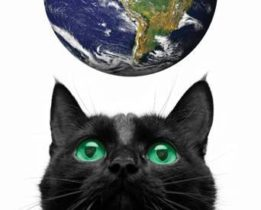 Black short hair cat looking up earth