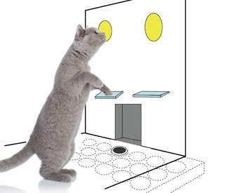 Gray cat standing up to press a lever