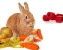 Small-animal-nutrition-trends-1401PETnutrition