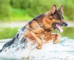 Active-dogs-protein-power-1410PETprotein.jpg
