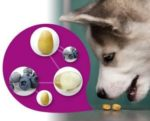 Petfood-nanotechnology-1211PET1