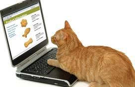 1105PETonline1 cat-food-trends