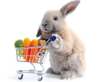 Retail-channel-habits-pet-consumers-1309PETretail