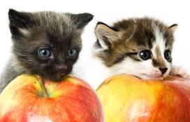 Two kittens resting their heads on apples